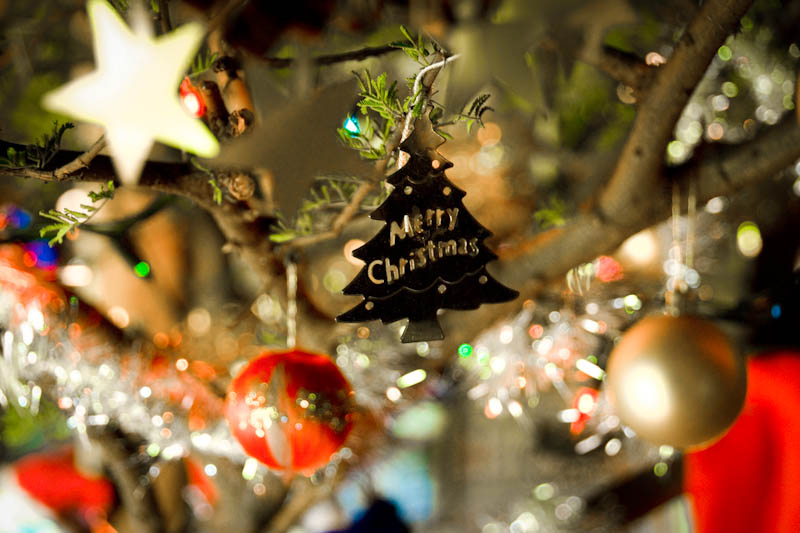 Christmas Decorations On A Camel Thorn Tree In South Africa Photo From Flickr By