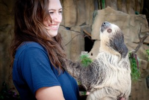 A Point Defiance Zoo and Aquarium ambassador holds Siesta, a two toed Sloth who has lived at the zoo for almost 15 years. (Courtesy photo)